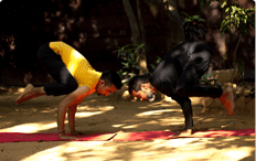 bakasana crow pose yoga centre